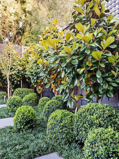 Best Magnolia Little Gem Design Ideas Amp Remodel Pictures