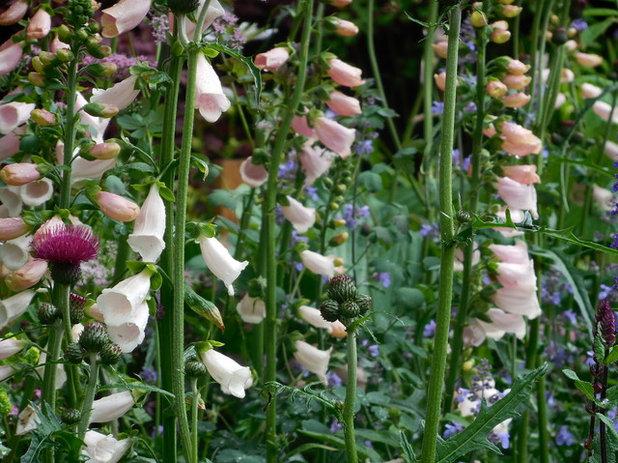 Ядовитые цветы в саду