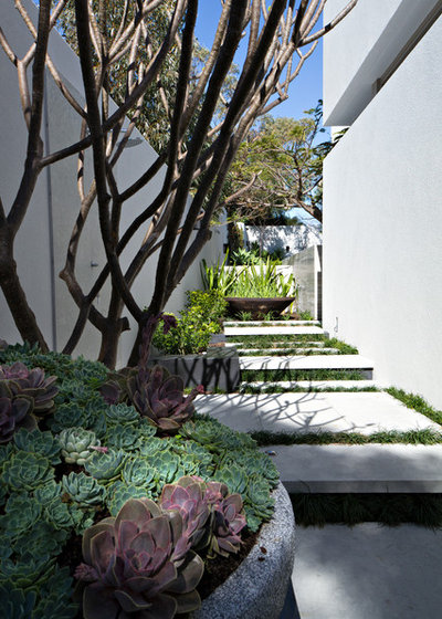 Contemporary Garden by Tim Davies Landscaping | Perth