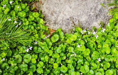 Почвопокровные растения: Зеленый ковер для сада
