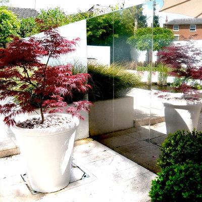 Contemporary Garden by Joanne Alderson Design