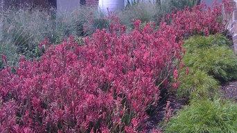 Contemporary Native Australian Garden