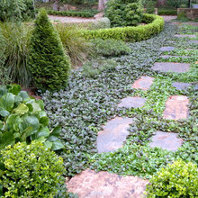 Ground Force: Top 10 Ground Covers for Your Garden