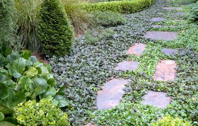 Cosa Piantare Tra le Fughe della Pavimentazione del Giardino?