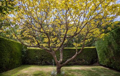 Sempreverdi topiate le piante per creare forme decorative in giardino - Piante decorative da giardino ...