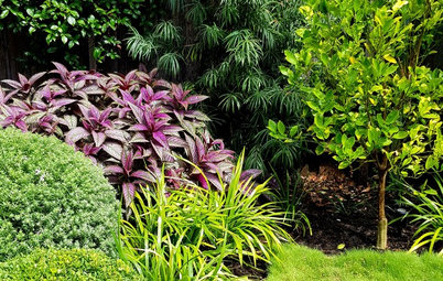 Picture Perfect: 30 Fabulous Front Gardens