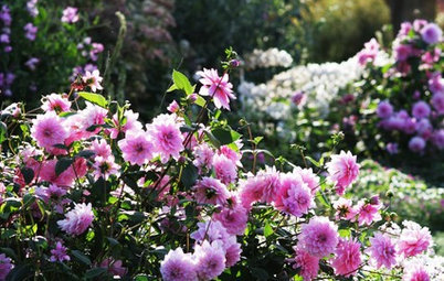 Pink Flowers to Sweeten Your Garden