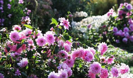 Pink Flowers to Sweeten Your Garden