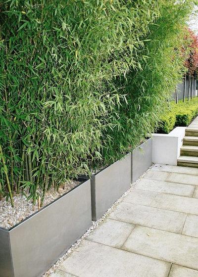 Modern Garden by Laara Copley-Smith Garden & Landscape Design