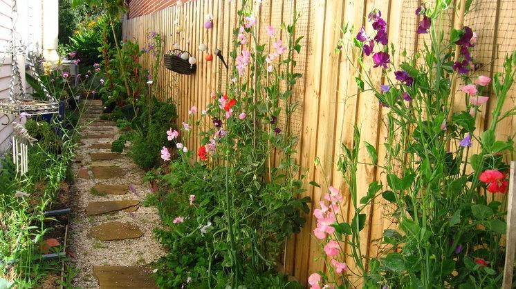 Clover in flower beds killing fall winter landscape ideas for Garden design jobs melbourne