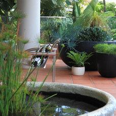 Modern Landscape by The Balcony Garden