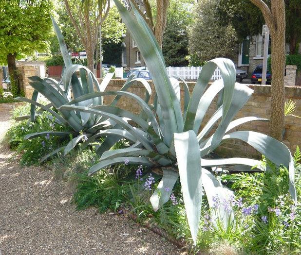 Contemporary Garden by Silva Landscapes