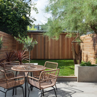 This is an example of a small contemporary back garden in London with a potted garden and concrete paving.