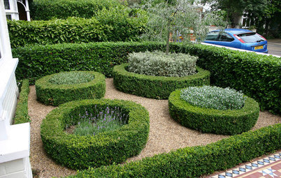 How to Look After Your Hedges – 8 Pruning and Maintenance Tips