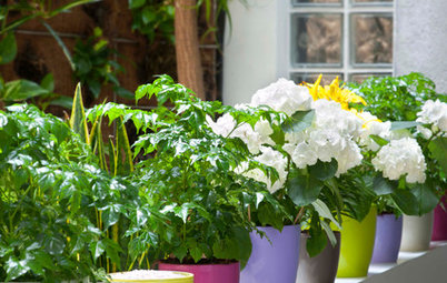 Try This Shortcut to Extra Garden Colour