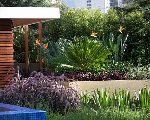 Bird of paradise home design ideas pictures remodel and for Ground force garden designs
