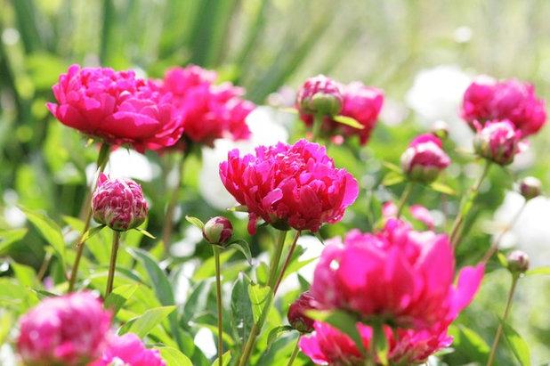 Klassisch Garten by Laara Copley-Smith Garden & Landscape Design