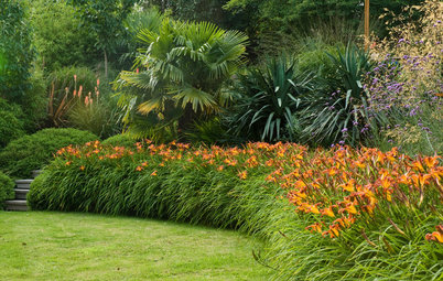 Get the Most Out of Your Daylilies