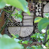 Yes, You Can Create a Wildlife Haven in a Small Garden