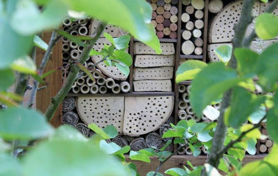 12 Ways to Create a Wildlife Haven in a Small Garden