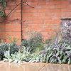 Cultiver des plantes à caresser, mode d