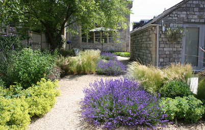 9 Ways to Use Lavender in Your Garden Design