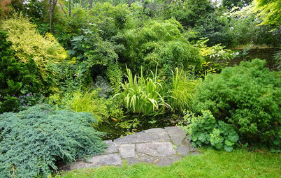 Garden Tour: A Small Plot Transformed into a Lush Wildlife Haven