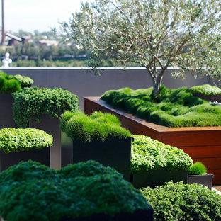 Aménagement d'un jardin éclectique.