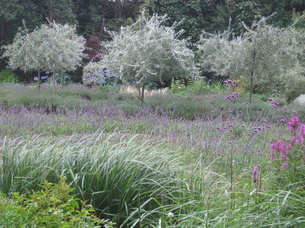 Country Garden by Alison Wear Garden Design