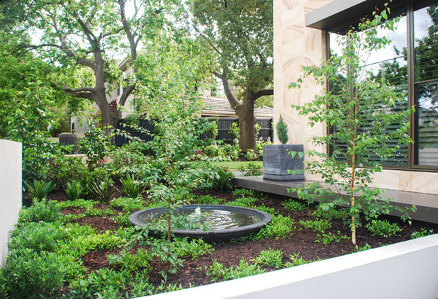 Contemporary Garden by Whyte Gardens