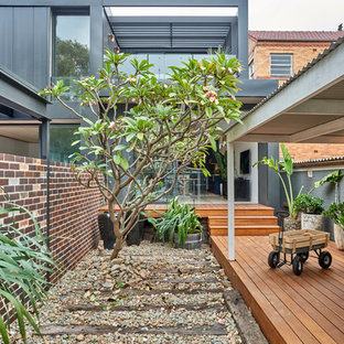 Photo of a contemporary backyard full sun xeriscape in Sydney with decking.