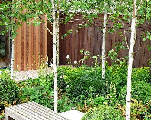 White Birch Trees Ideas Pictures Remodel And Decor
