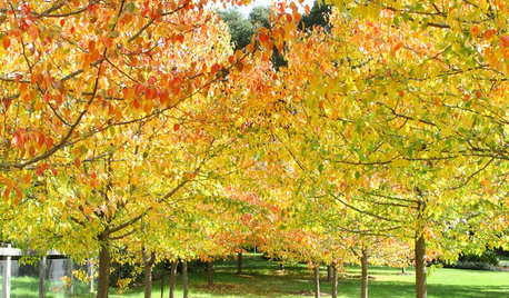 10 Trees That Will Add Autumn Colour to Your Garden