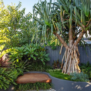 Tropical backyard garden in Brisbane.