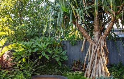 Room of the Week: Featureless Backyard to Tropical Retreat