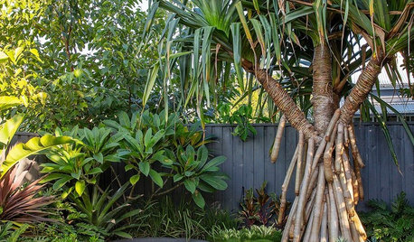 Room of the Week: Featureless Backyard to Tropical Retreat