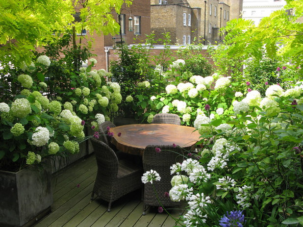 Contemporary Garden by The London Gardener Ltd