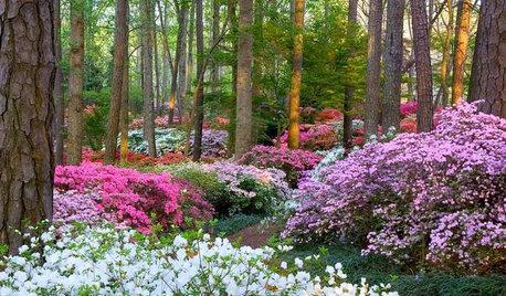 Year of Colour: Australian Gardens Through the Seasons