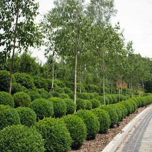 This is an example of a huge shabby-chic style landscaping in Kent.