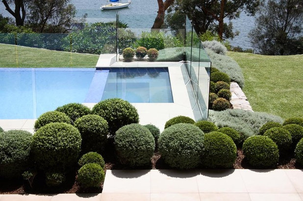 Cultiver le buis mode d 39 emploi - Design giardini esterni ...