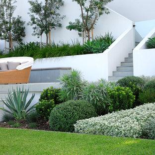 Design ideas for a large modern backyard retaining wall landscape in Sydney.