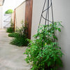 10 Unexpected Spots for Growing Fruits, Veggies and Herbs at Home
