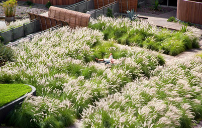 12 gute Gründe für Gräser im Garten