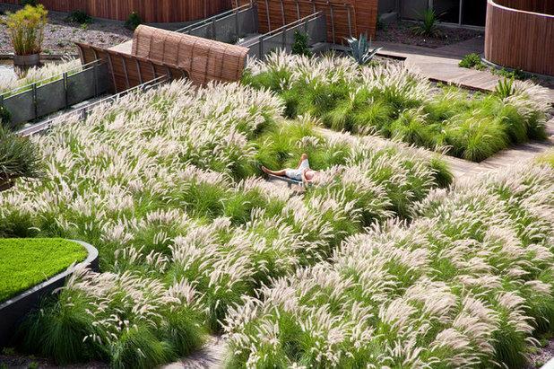 Gräser Garten lassen sie gras drüber wachsen basics zum gräsergarten