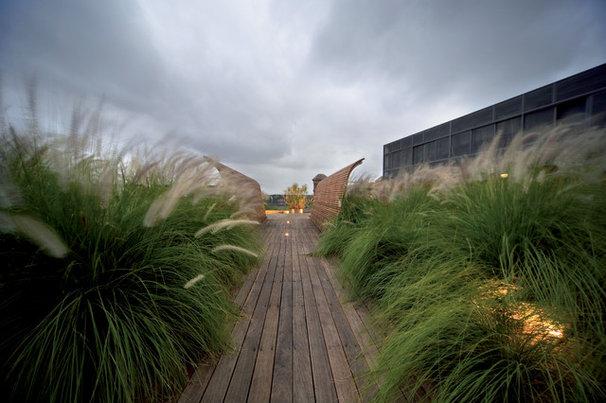 Beach Style Landscape by Dale Jones-Evans Pty Ltd Architecture