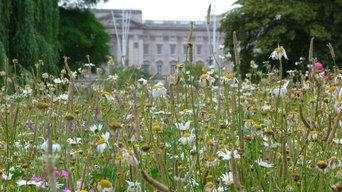 Meadowmat Wildflower Turf in St James's Park, London