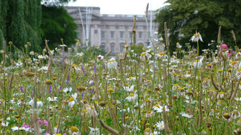 Meadowmat Wildflower Turf in St James's Park, London