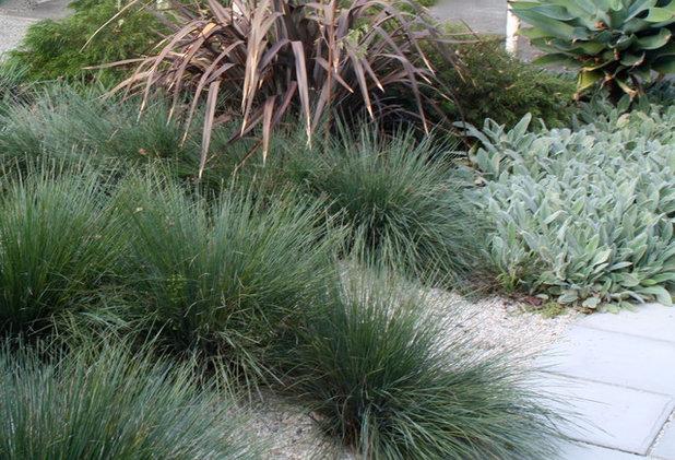 Modern Garden by Karen Johnson Landscape Design