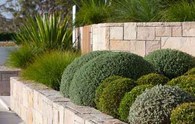 Designing With Conifers: Find the Perfect Fit for Your Landscape