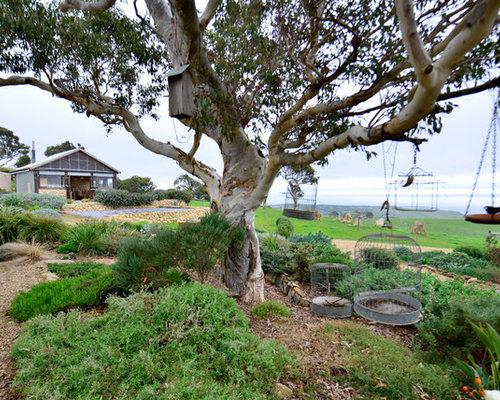 Native Australian Garden Home Design Ideas, Pictures